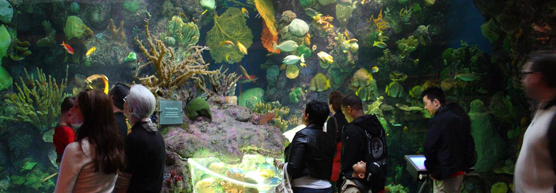Part of the Wild Reef exhibit at Shedd Aquarium in Chicago, Illinois
