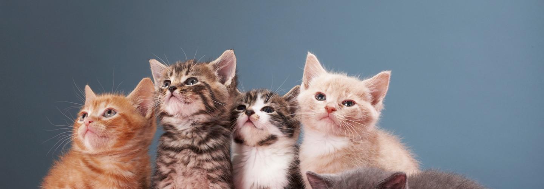 Virtual Server Cats