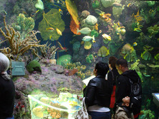 Part of the Wild Reef exhibit at Shedd Aquarium in Chicago, Illinois